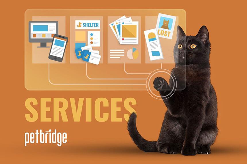 A black cat scrolls through PetBridge capabilities.