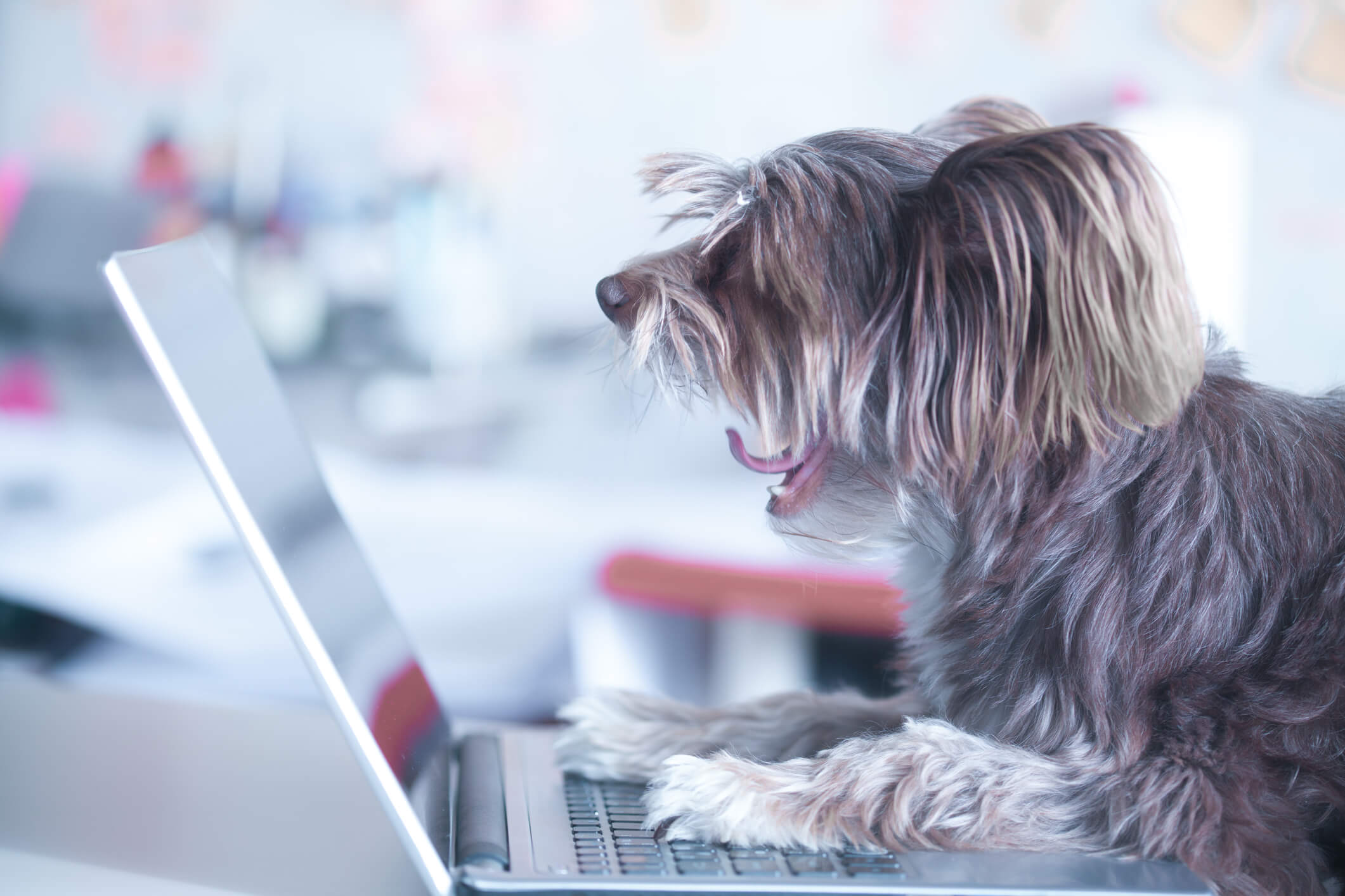 A small dog is on a laptop reading an email newsletter