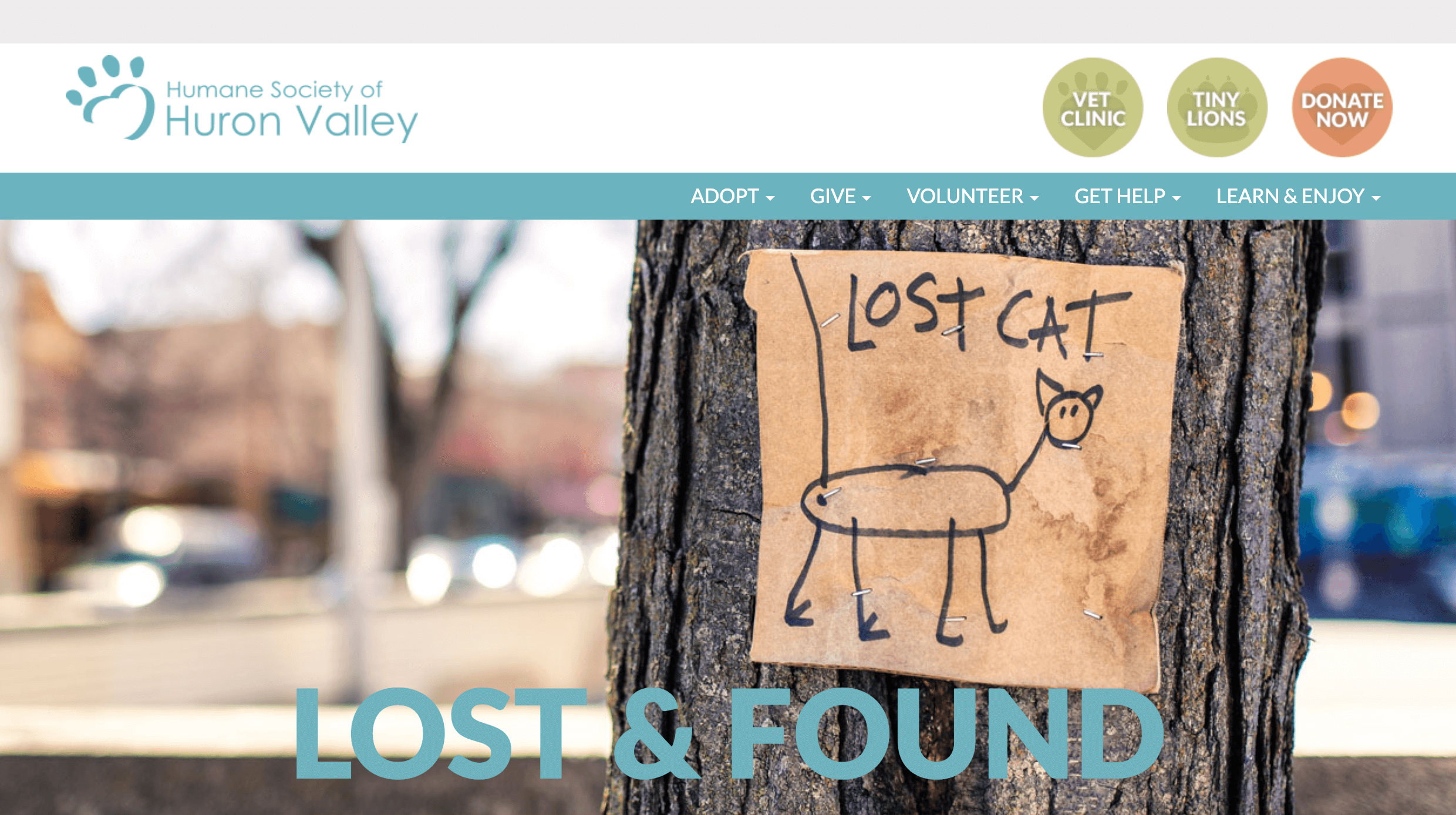 A lost cat poster is attached to a tree trunk
