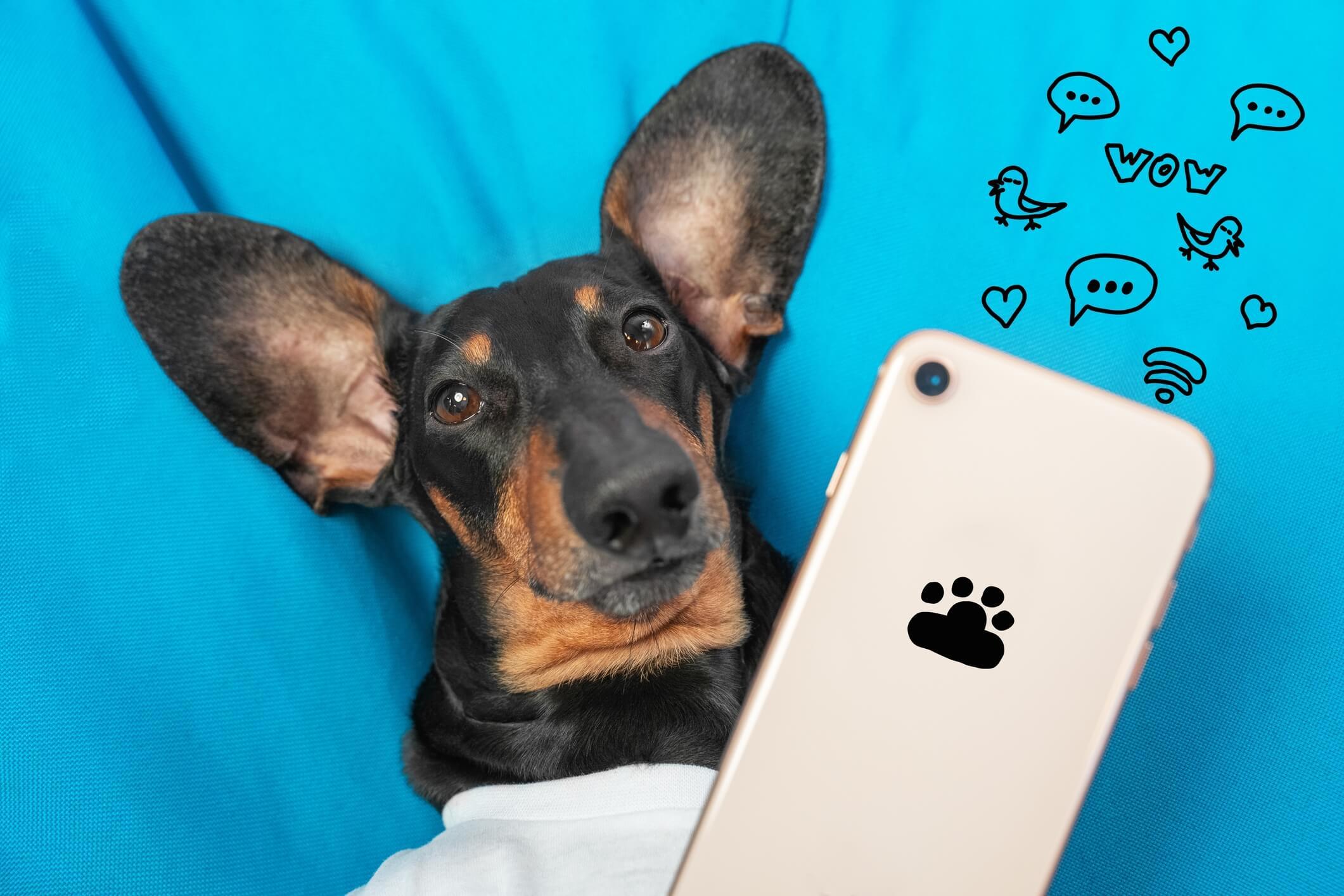 a cute dog holds a smartphone